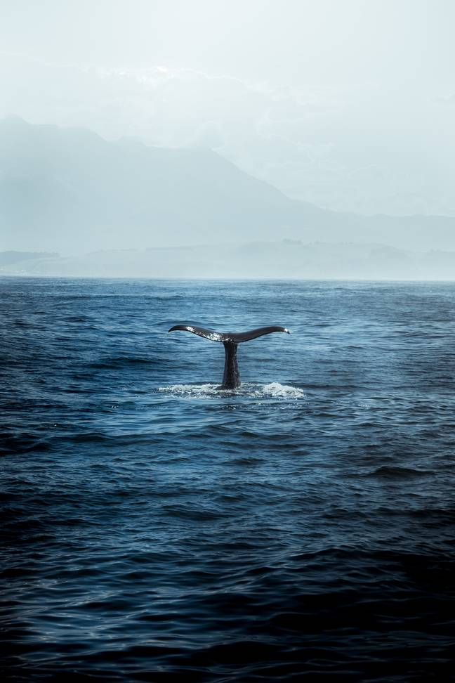 More than 350 scientists have signed an open letter calling for urgent action to save cetaceans (Credit: Unsplash)