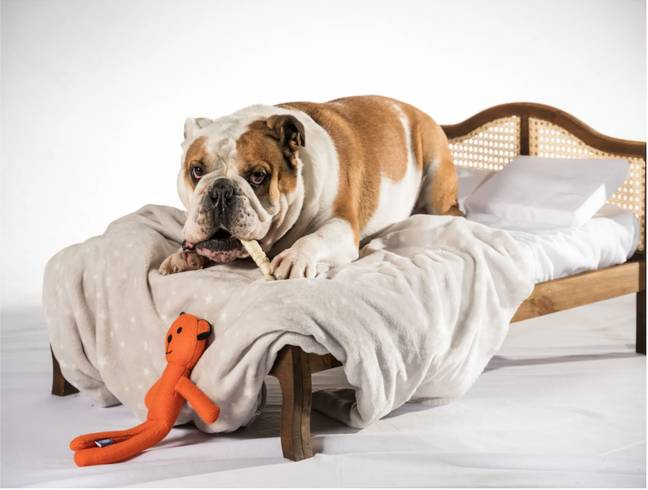 The beds start from £339 and are handmade. This is the 'Ruff Ruff Wooden Rattan Pet Bed' (Credit: Time4Sleep)