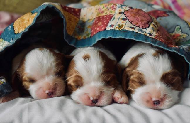 Those who take part in the puppy study can get paid £20 an hour (Credit: Unsplash)