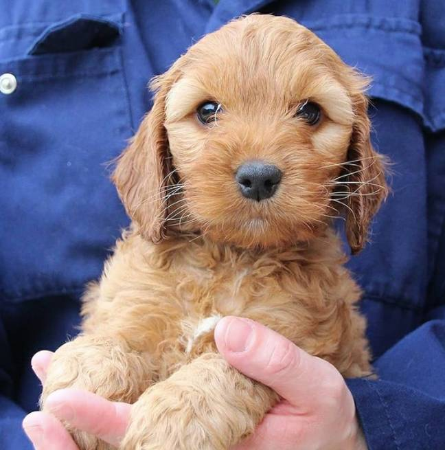 Dogs Trust has re-homed 1,500 pups through its pilot scheme (Credit: Dogs Trust)