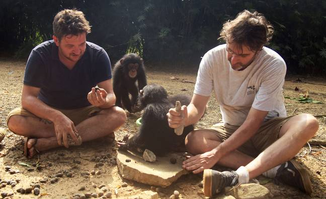 Jimmy, Jenny and the team of caregivers provide a safe space and care system for the chimp babies (Credit: BBC)