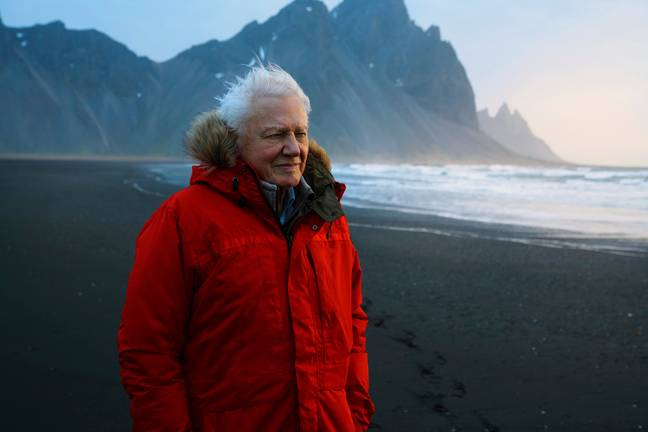 Attenborough has most recently worked on 'Seven Worlds, One Planet' (Credit: BBC)