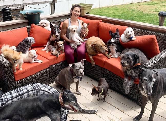 The couple care for 20 dogs, who they share a bed with (Credit: Caters)