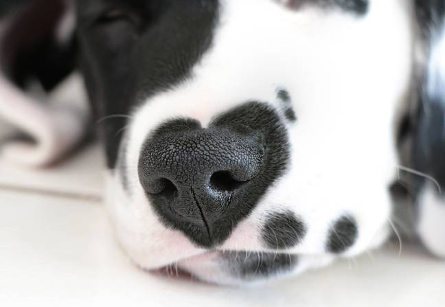 Rorschach's unique heart-shaped markings make him one of a kind (Credit: Caters)