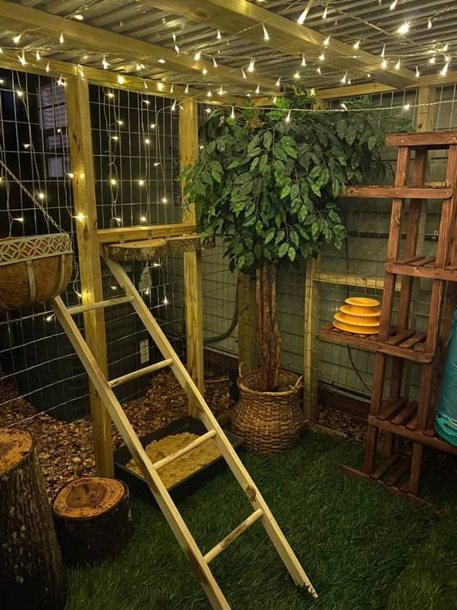The kitty play area includes platforms and ladders (Credit: Caters)