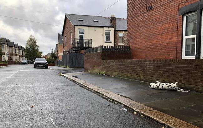 Rachael Barraclough spotted the 'dead' Dalmatian while she waited for her bus to work (Credit: Kennedy)