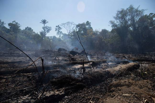 The Amazon rainforest after a fire in 2019 (Credit: PA)