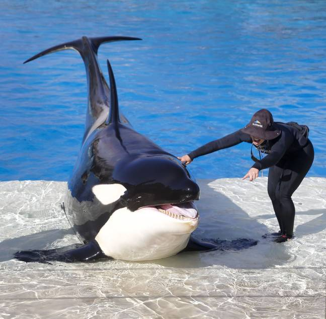 SeaWorld and other marine attractions won't be working commercially with TripAdvisor under their new guidelines Credit: PA