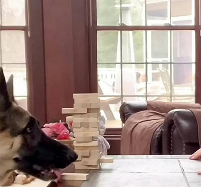 She then pops the block on the table (Credit: SWNS)