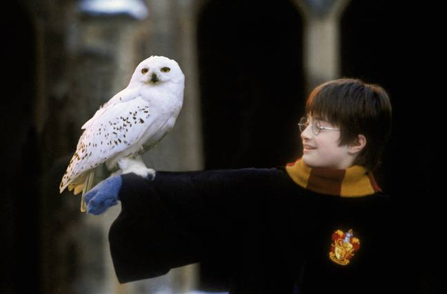 Hedwig is a Harry Potter staple (Credit: Warner Bros)
