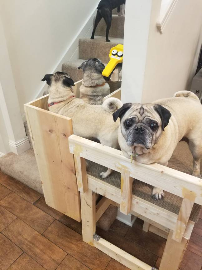 The pups queued up for a ride up and down the stairs (Credit: Caters)