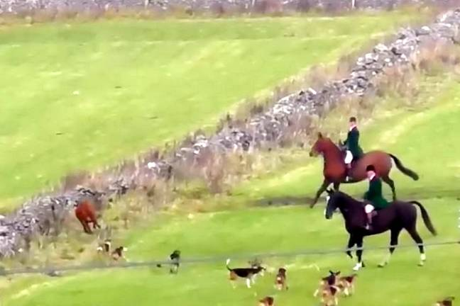 The dogs were eventually called off by huntsmen (Credit: SWNS)