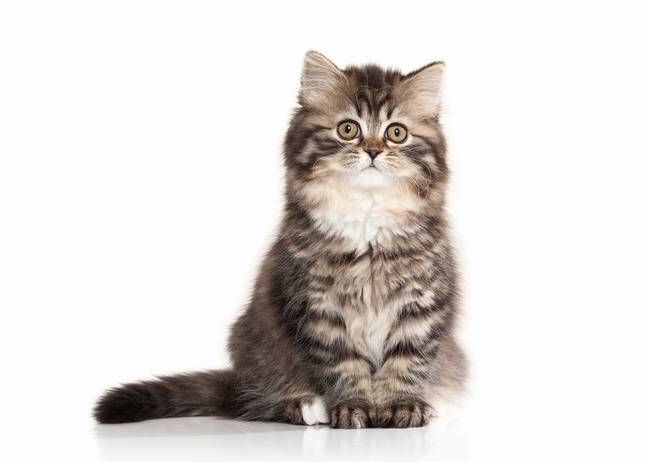 Luna was the top name for kittens in 2020 (Credit: Shutterstock)