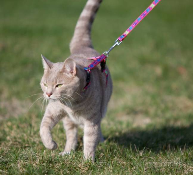 Cats apparently like being walked as much as dogs (Credit: Lupinepet)