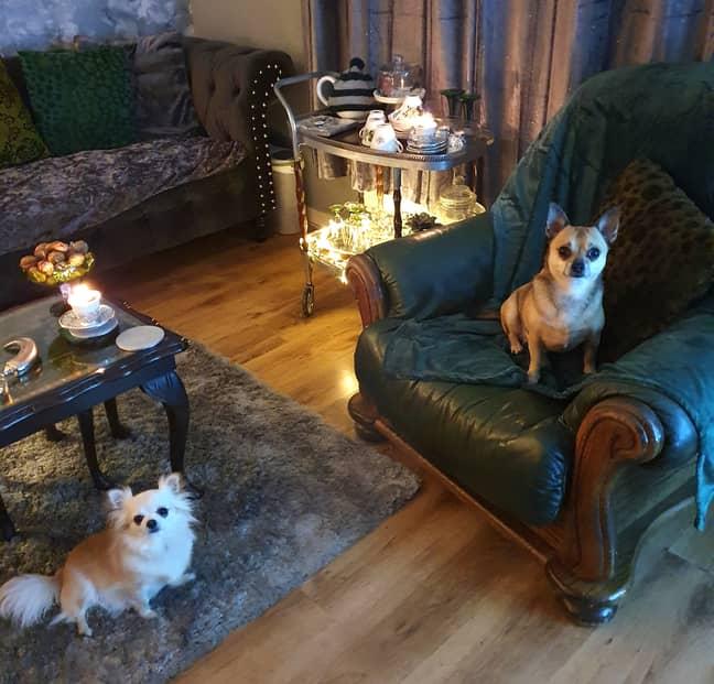 The dogs certainly appreciate the work (Credit: LatestDeals.co.uk/Rachel Wood)