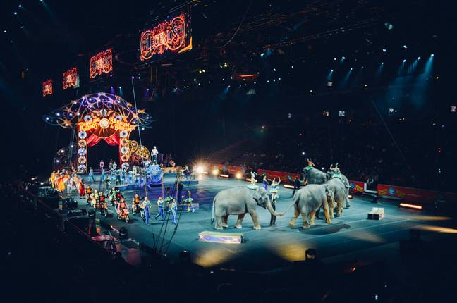 Wild animals will be banned from ravelling circuses (Credit: Unsplash)