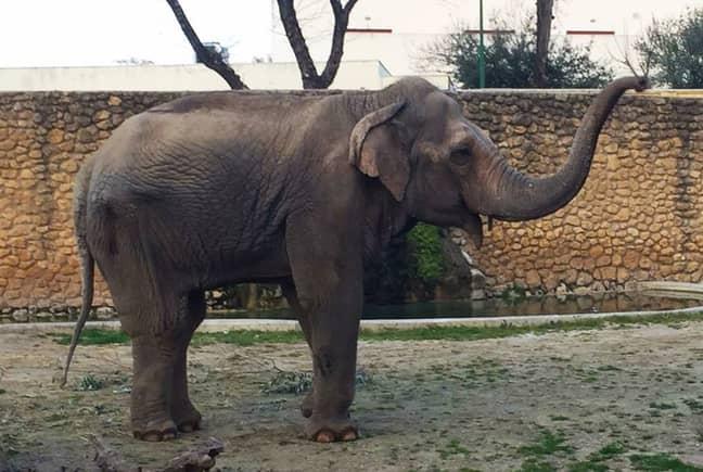 Credit: Facebook/Zoo de Cordoba