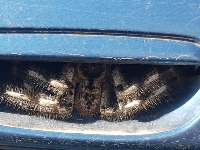 Christine Jones took the pictures after finding a spider in her car's door handle (Credit: Christine Jones/Facebook)