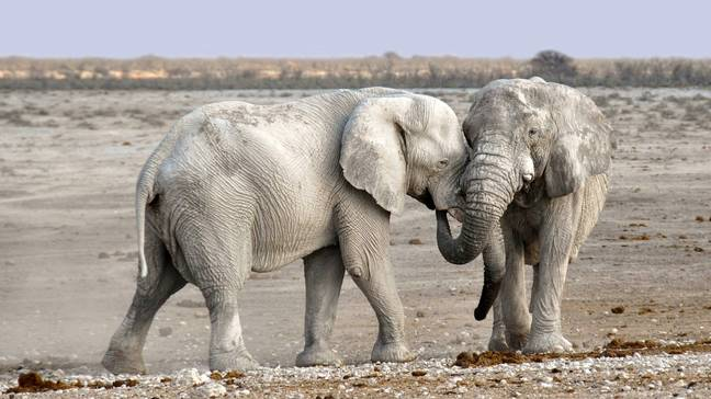 Conservationists say that forest agricultural clearing is mainly to blame for the sharp decrease in the number of elephants (Credit: Pixabay)
