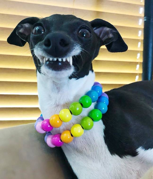 Her owner began sharing photos of her unique smile in 2018 (Credit: Caters)