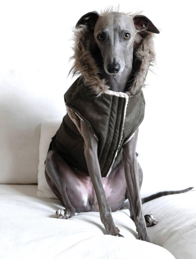 Modelled by adorable pooch Lloyd, the jacket is perfect for frosty Winter mornings (Credit: Aldi)