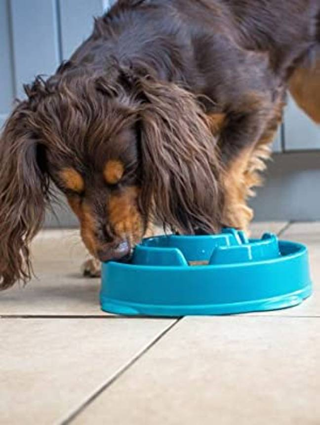 The bowls come in a variety of shapes and sizes to suit different breeds (Credit: Amazon)