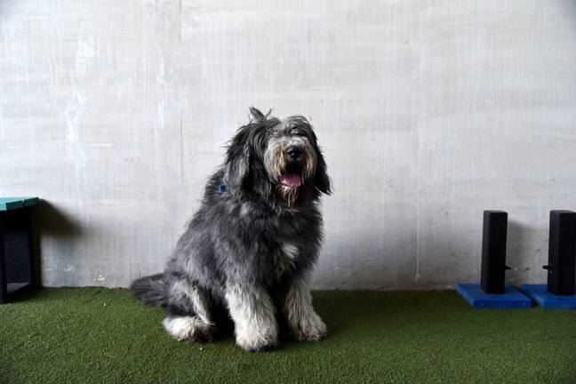 Poor Arlo was matted so badly he couldn't see (Credit: SWNS)