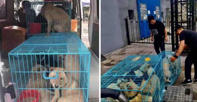 Dogs being rescued from cages in Yulin (Credit: Instagram/ No To Dog Meat)
