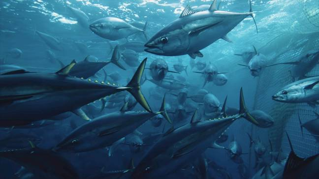 One of the issues raised was over dolphin safe tuna (Credit: Netflix)