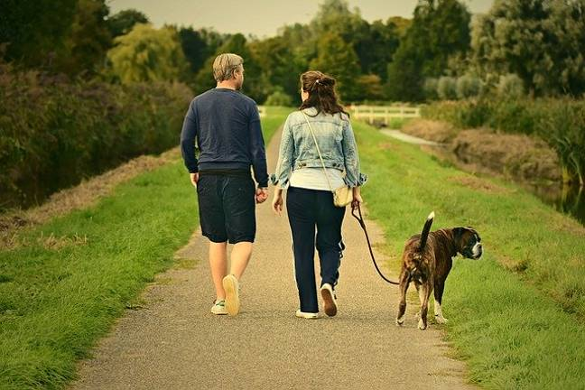 Walking your dog during the excessive heat could cause fatal heatstroke, say researchers (Credit: Pixabay)