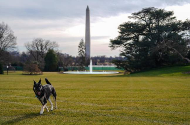 Major is the first shelter dog in the White House (Credit: White House Photo)