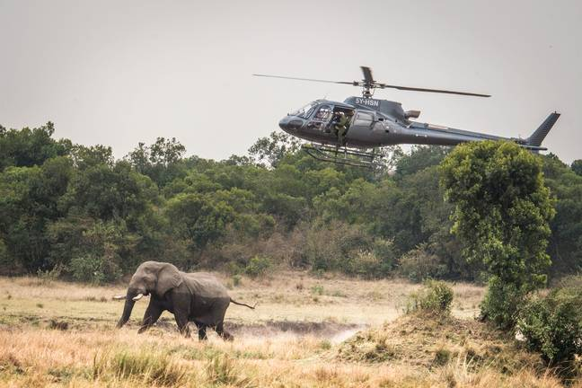 The mobile vets were called to the elephant's aid (Credit: Caters)