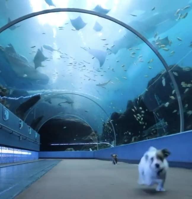 The puppies had the aquarium to themselves (Credit: Atlanta Humane Society)