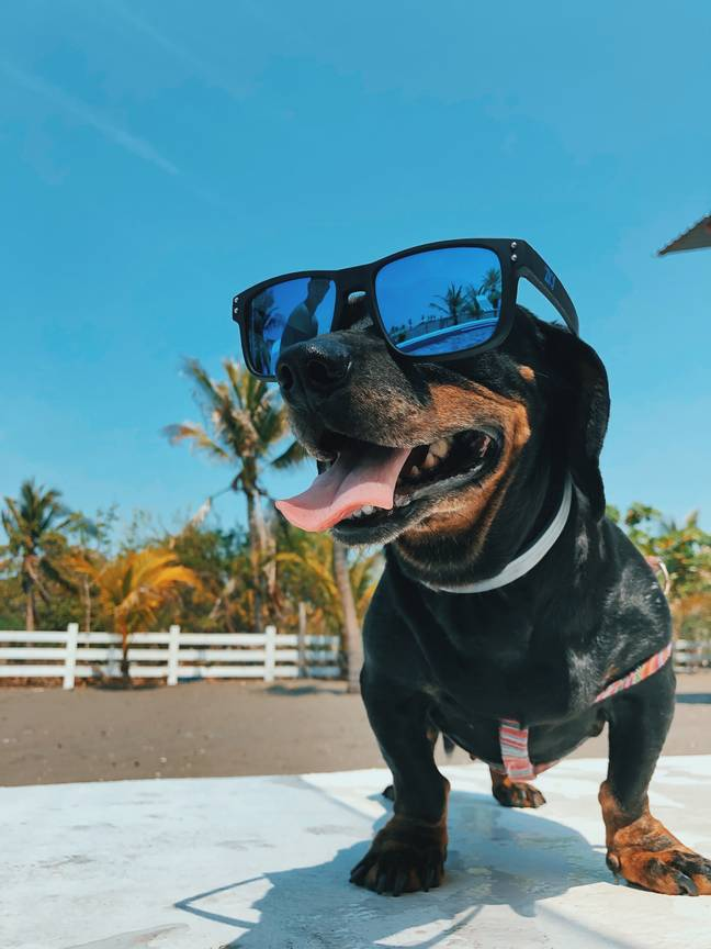 Not all dogs like hot weather (Credit: Unsplash)