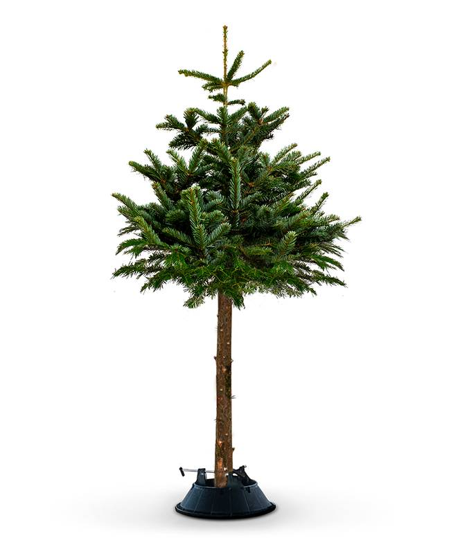 The cat-proof Christmas trees cost £129.99 (Credit: christmastrees.co.uk)