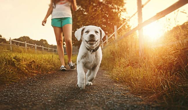 It's best to walk your dog in the mornings or evenings when it's cooler (Credit: Shutterstock)
