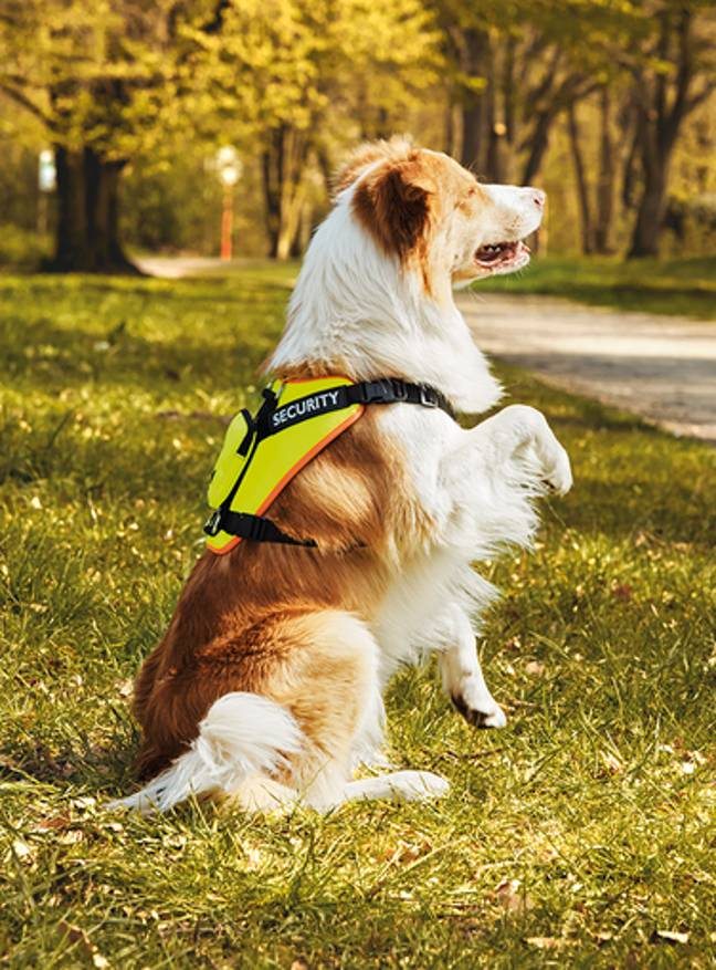 The Zoofari Reflective Dog Harness (£14.99) ensures your pooch never goes missing in the dark (Credit: Lidl)