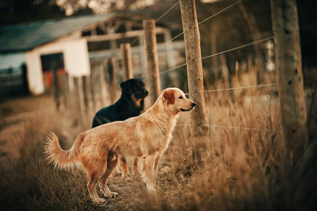Many dogs are being rehomed before they're even a year old (Credit: Pexels)