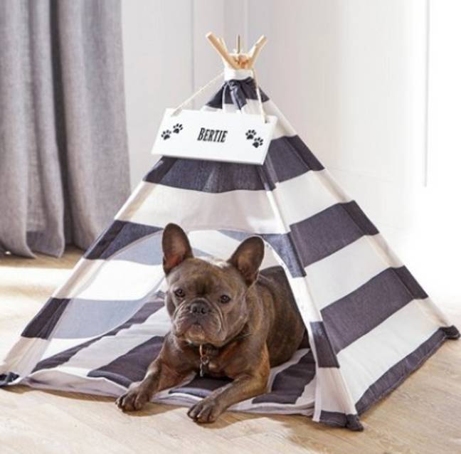 Pet Teepees are our favourite new trend (Credit: Studio.co.uk)