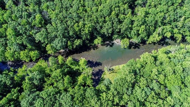 The rainforest is home to 3 million species (Credit: Unsplash)