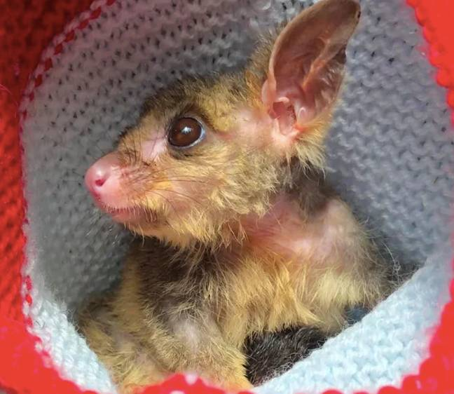 Half a billion animals have been affected in New South Wales alone (Credit: Animal Rescue Craft Guild)