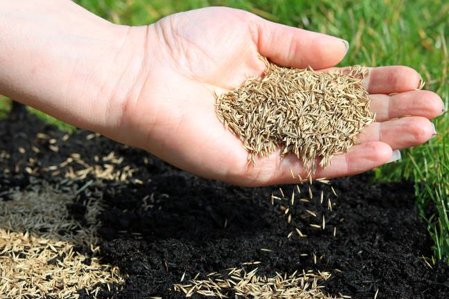 Grass seeds can be a particular problem in breeds with feathery toes (Credit: Shutterstock)
