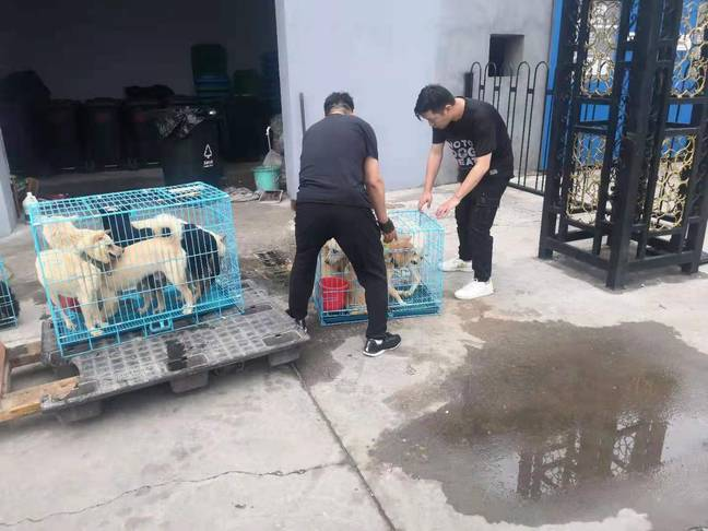 Volunteers on the ground rescuing the slaughterhouse pups (Credit: No To Dog Meat)