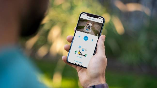 You can check on your pet when you're out and about (Credit: MyQ Pet Portal)