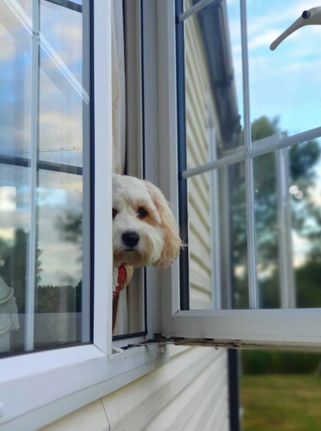 Does your pup love people watching? (Credit: Safestyle)