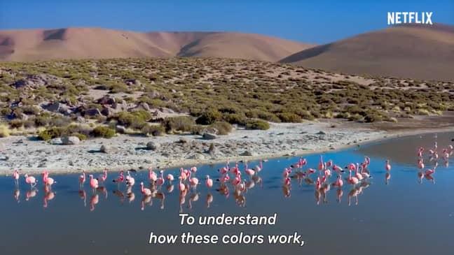 Life in Color (Credit: Netflix)
