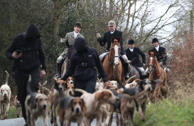Anti-hunting groups are calling for information on the killing [STOCK IMAGE] (Credit: PA)