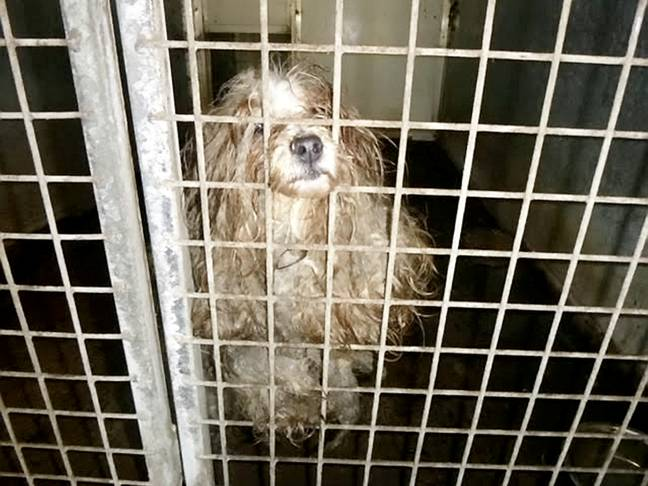 The dogs had been neglected in the kennels (Credit: SWNS)