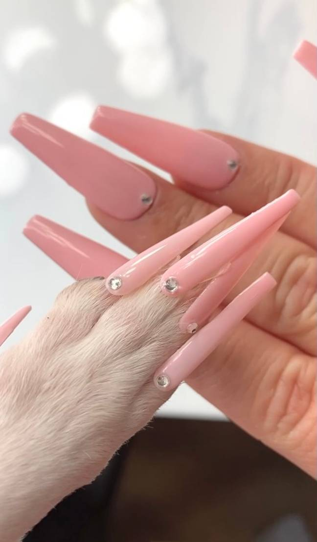 Nail technician Maritza Rubalcava makes nails for her pooch Coco (Credit: Mercury)
