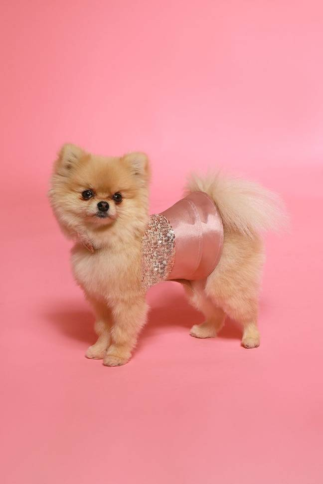 The limited-edition dog outfit is ultra-lightweight and fastens with Velcro. (Credit: Pink Boutique)